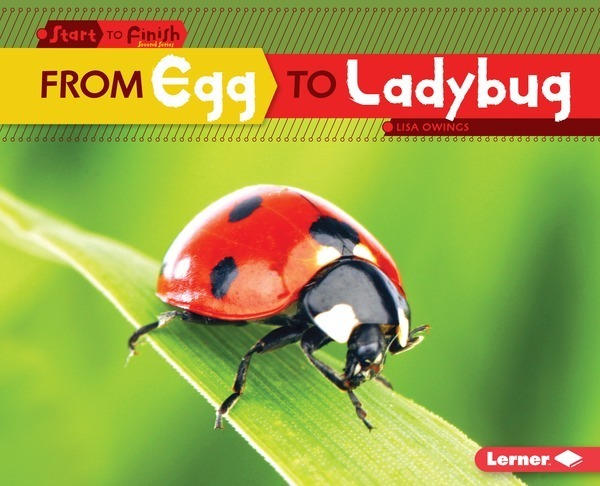 From Egg to Ladybug - Lerner Publishing Group