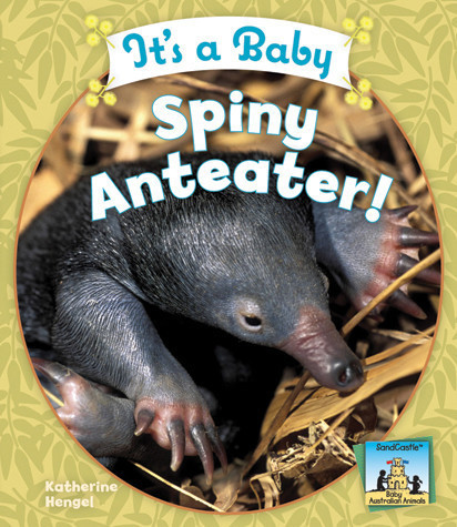 Cover: It's a Baby Spiny Anteater!