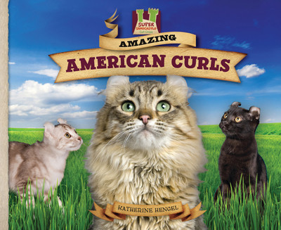 Cover: Amazing American Curls