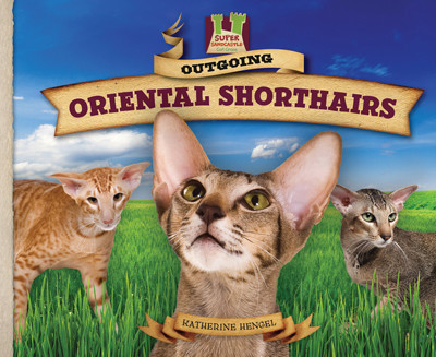 Cover: Outgoing Oriental Shorthairs