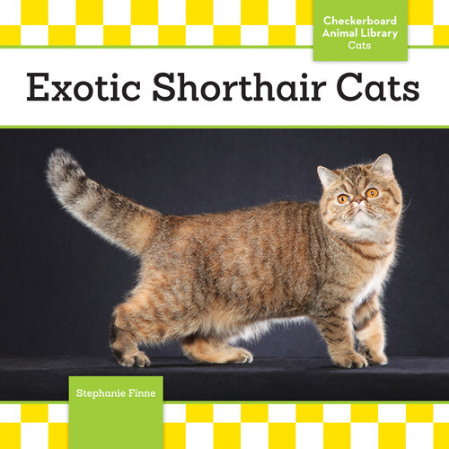 Cover: Exotic Shorthair Cats