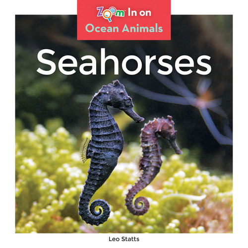 Cover: Seahorses