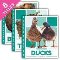 Cover: Pond Animals