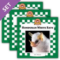 Cover: Bats Set 2