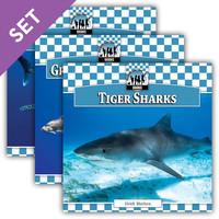 Cover: Sharks Set 1