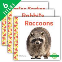 Cover: Everyday Animals
